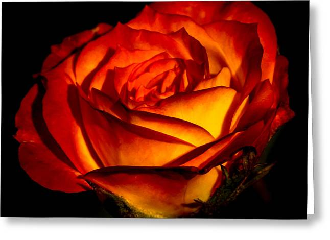 Multicolored Roses Greeting Cards - A Special Rose Greeting Card by Ernie Echols