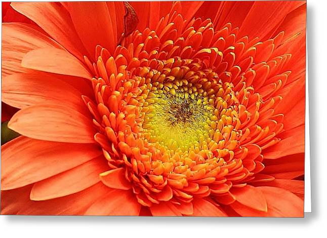 A Splash Of Happiness Greeting Card by Bruce Bley