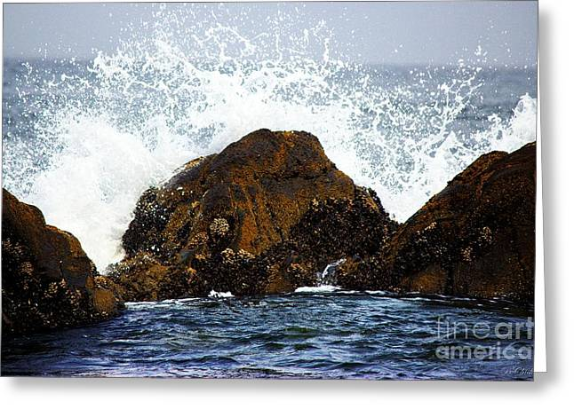 Surfing Photos Greeting Cards - A Splash On the Rocks Greeting Card by Barbara Chichester