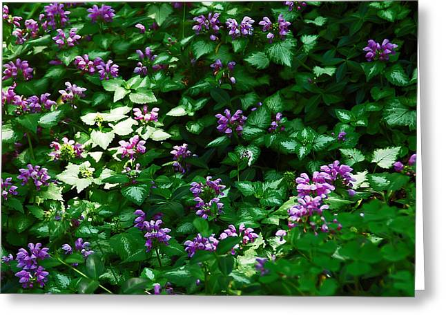 A Spot Of Sunlight Greeting Card by Aimee L Maher Photography and Art Visit ALMGallerydotcom