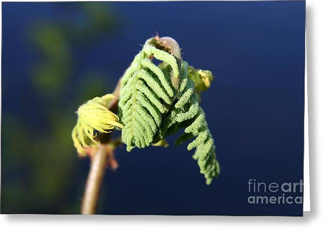 Wildflower Greeting Cards - A Spring Beginning  Greeting Card by Neal  Eslinger