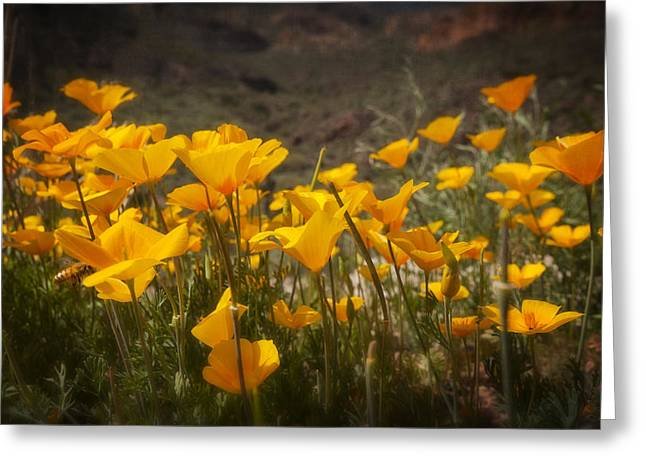 Golden Poppies Greeting Cards - A Spring Bouquet  Greeting Card by Saija  Lehtonen