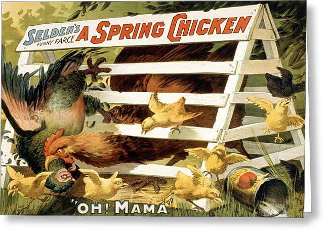 Old Barn Drawing Greeting Cards - A spring chicken Greeting Card by Aged Pixel