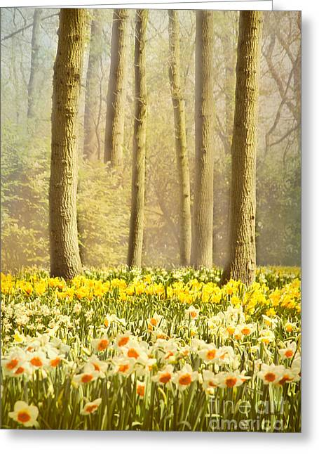 Spring Scenes Greeting Cards - A Spring Day Greeting Card by Jasna Buncic