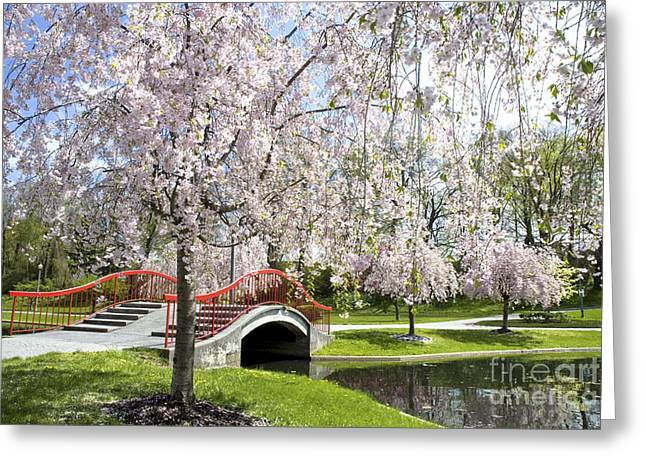Italian Lake Greeting Cards - A spring walk Greeting Card by Paul W Faust -  Impressions of Light