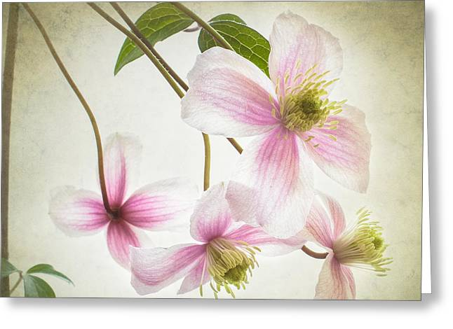 Artistic Photography Greeting Cards - A sprinkling of pink Greeting Card by Constance Fein Harding