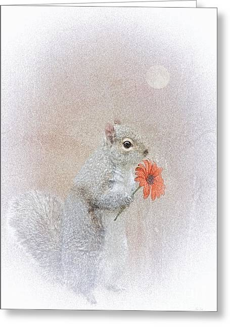 Thomas York Greeting Cards - A Squirrel In Love Greeting Card by Tom York Images