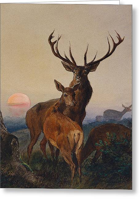 Doe Greeting Cards - A Stag with Deer in a Wooded Landscape at Sunset Greeting Card by Charles Jones