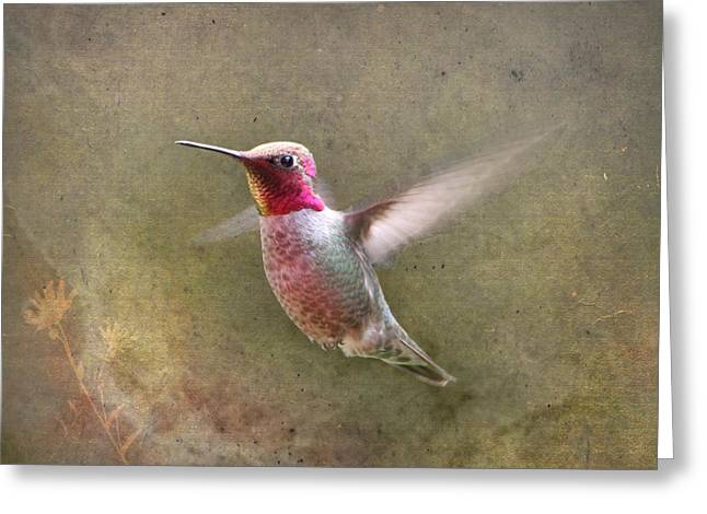 Hovering Greeting Cards - A Star is Born Greeting Card by Angie Vogel