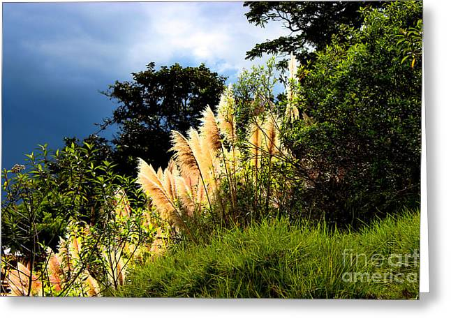 Pampas Grass Greeting Cards - A Storm Is A Brewin Greeting Card by Al Bourassa
