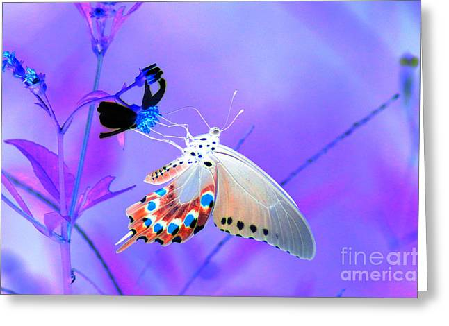 Kim Pate Greeting Cards - A Strange Butterfly Dream Greeting Card by Kim Pate