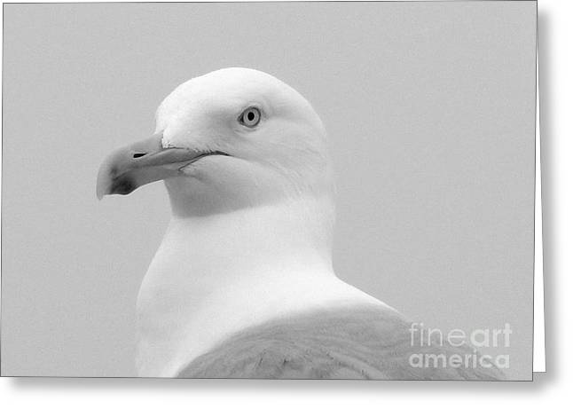 Seabirds Greeting Cards - A study in black and white Greeting Card by Karen Cook