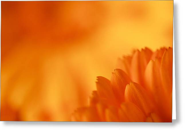 Nature Study Greeting Cards - A Study in Color Greeting Card by Karma Boyer