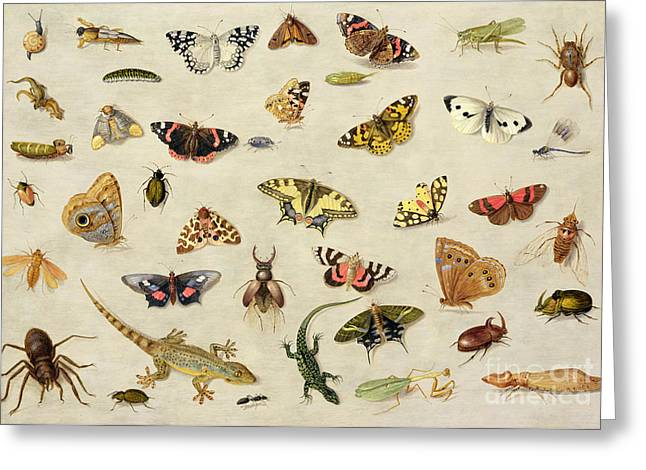 Cricket Paintings Greeting Cards - A Study of insects Greeting Card by Jan Van Kessel