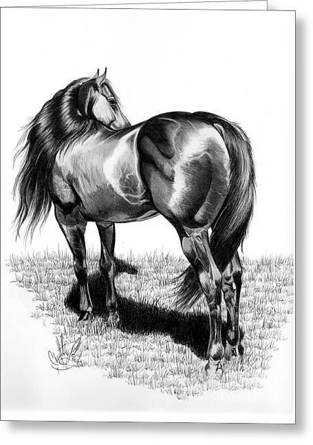 A Study Of The Thoroughbred Hindquarters In Bic Pen Greeting Card by Cheryl Poland