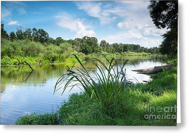 Catch And Release Greeting Cards - A Summer Day of Stubblefield waterplants Greeting Card by Ellie Teramoto