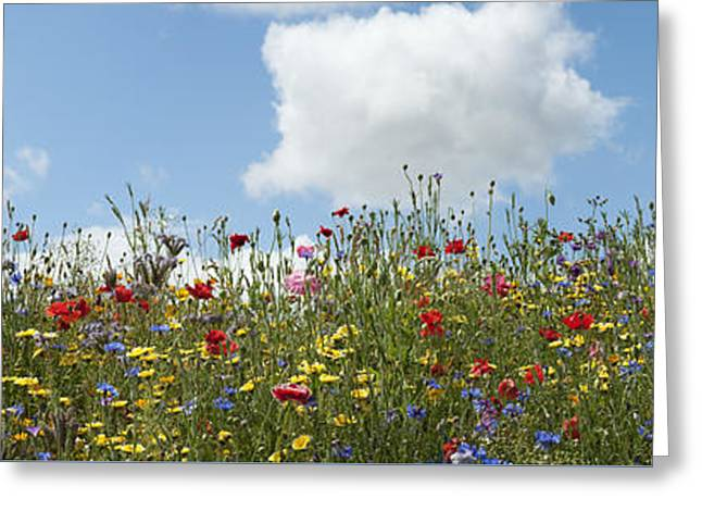 A Summers Day Greeting Card by Tim Gainey