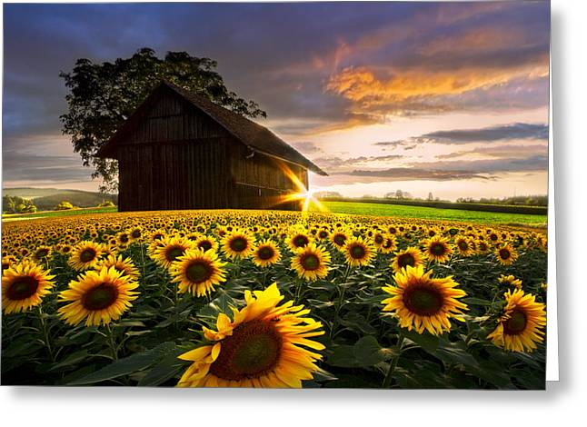 Swiss Photographs Greeting Cards - A Sunflower Moment Greeting Card by Debra and Dave Vanderlaan