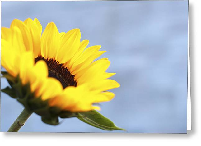 Baby Room Greeting Cards - A Sunflower Greeting Card by Terry DeLuco