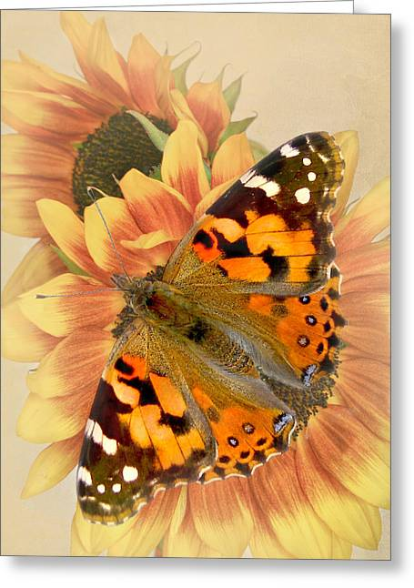 Painted Lady Greeting Cards - A sunny Day Greeting Card by David and Carol Kelly