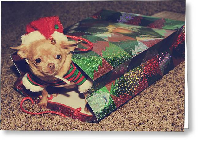 Dog Greeting Cards Greeting Cards - A Sweet Christmas Surprise Greeting Card by Laurie Search