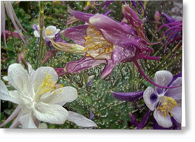 a taste of dew i do and PCC  garden too     GARDEN IN SPRING MAJOR Greeting Card by Kenneth James