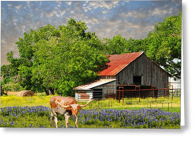 Hay Bales Greeting Cards - A Taste of Texas Greeting Card by Lynn Bauer
