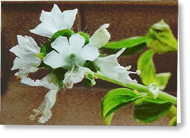 Saint Joseph Digital Greeting Cards - A Taste of the Basil Flower Greeting Card by Steve Taylor