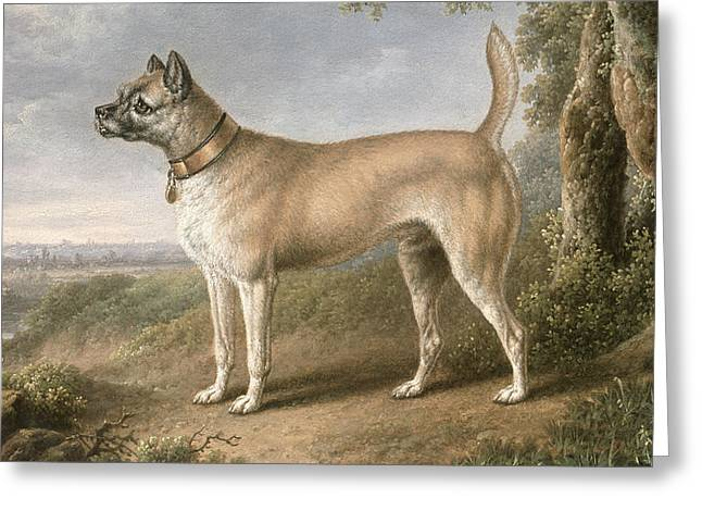 Doggies Greeting Cards - A Terrier on a path in a wooded landscape Greeting Card by Charles Towne