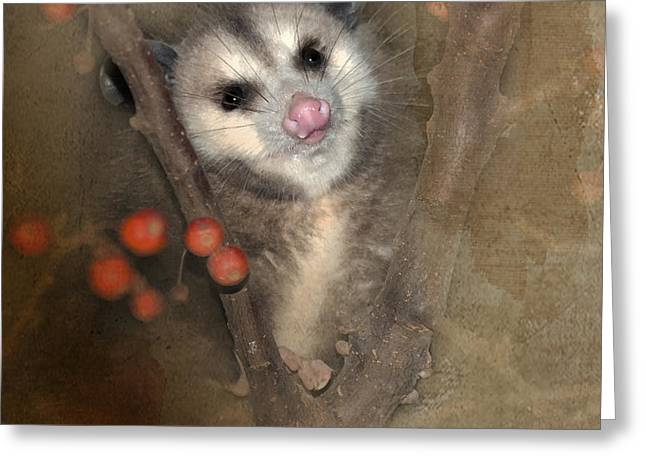 Possum Greeting Cards - A Thief in the Night Greeting Card by Betty LaRue