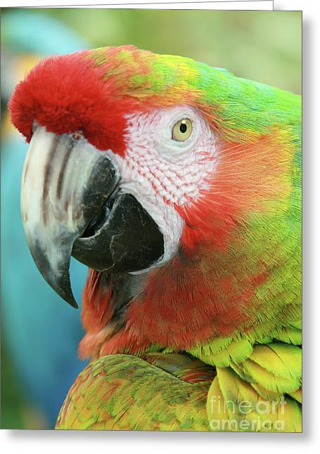 Love The Animal Greeting Cards - A Thing of Beauty is a Joy Forever Greeting Card by Sharon Mau