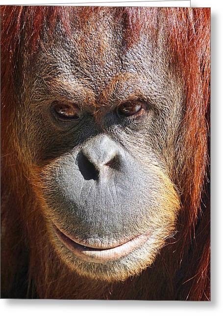 Sumatran Orang-utan Greeting Cards - A Thoughtful Orangutan Greeting Card by Margaret Saheed