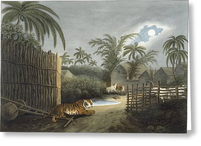 Hunting Drawings Greeting Cards - A Tiger Prowling Through A Village Greeting Card by Samuel Howett