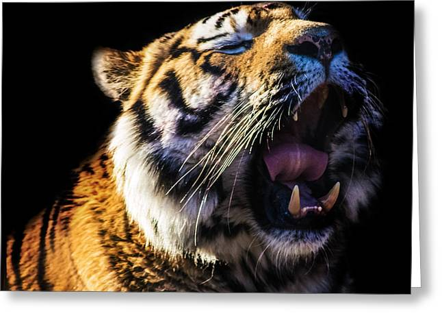 Fangs Greeting Cards - A Tigers Roar Greeting Card by Martin Newman