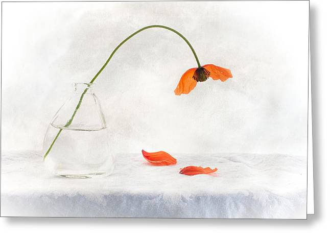 Constance Fein Harding Greeting Cards - A Time To Let Go Greeting Card by Constance Fein Harding