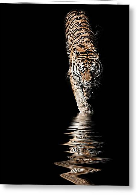 Tigers Greeting Cards - A time to reflect Greeting Card by Paul Neville