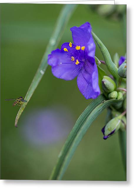 Tradescantia Greeting Cards - A Tiny Visitor Greeting Card by Dale Kincaid
