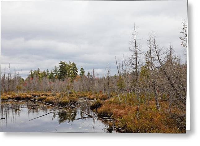 Fir Trees Greeting Cards - A Touch of Autumn near Raquette Lake Greeting Card by David Patterson