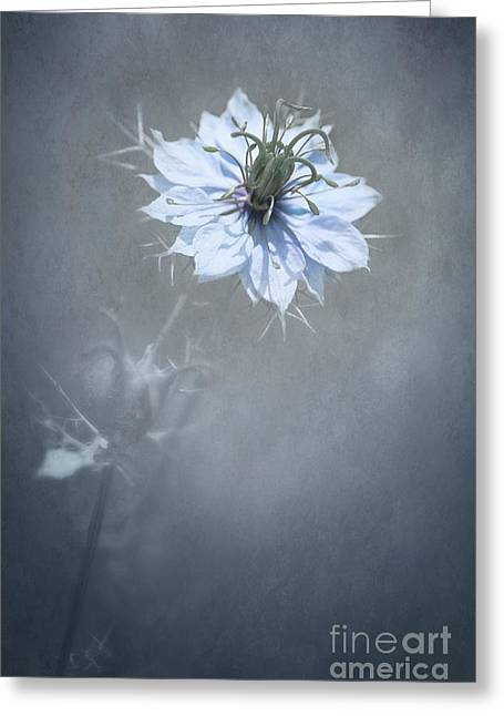 Anniversary Mixed Media Greeting Cards - a Touch of Blue Greeting Card by Svetlana Sewell
