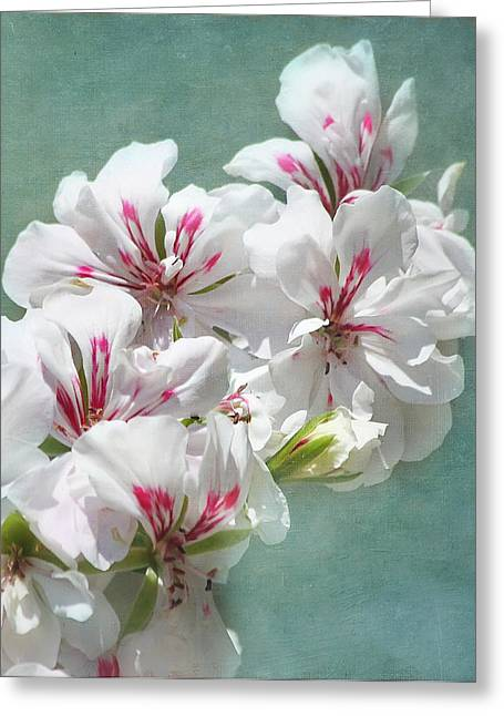 Geranium Flower Close Up Greeting Cards - A Touch of Class Greeting Card by Kim Hojnacki