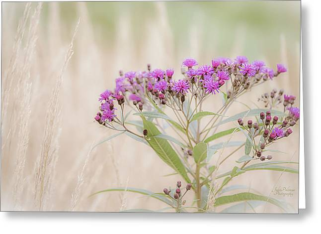 Sea Oats Greeting Cards - A Touch of Color Greeting Card by Julie Palencia