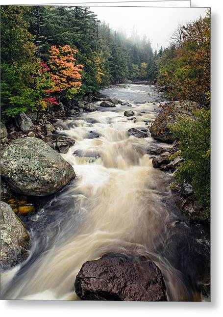 A Touch Of Fall Greeting Card by Mark Papke