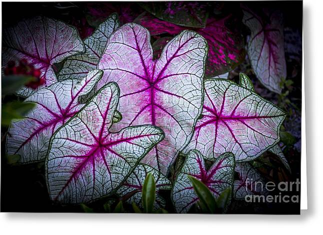 Flowers Miami Greeting Cards - A Touch of Red Greeting Card by Marvin Spates