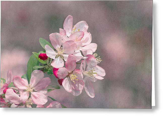 Pink Flower Branch Greeting Cards - A Touch of Spring Greeting Card by Kim Hojnacki