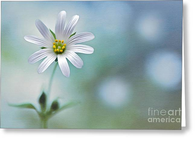 Star Of Bethlehem Greeting Cards - A Touch of White Greeting Card by Jacky Parker
