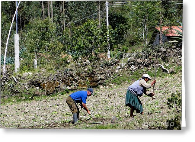 Manual Labor Greeting Cards - A Tough Row To Hoe Greeting Card by Al Bourassa
