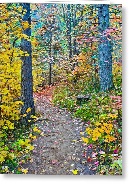 West Fork Greeting Cards - A Trail in West Fork Greeting Card by Brian Lambert