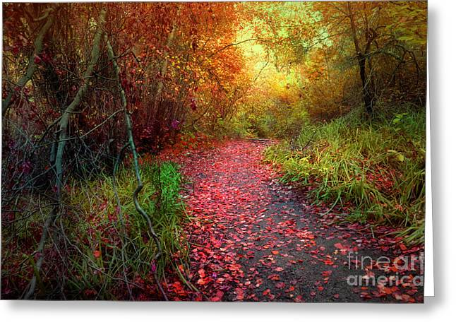 Hobo Greeting Cards - A Trail of Fallen Leaves Greeting Card by Tara Turner