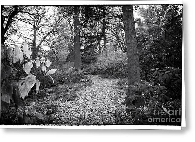 Photos Of Autumn Greeting Cards - A Trail of Leaves Greeting Card by John Rizzuto