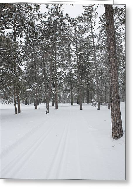 Pinus Resinosa Greeting Cards - A Trail through the Forest Greeting Card by Tim Grams